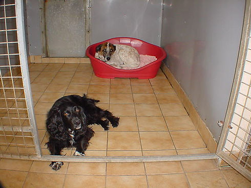 two dogs in a kennel