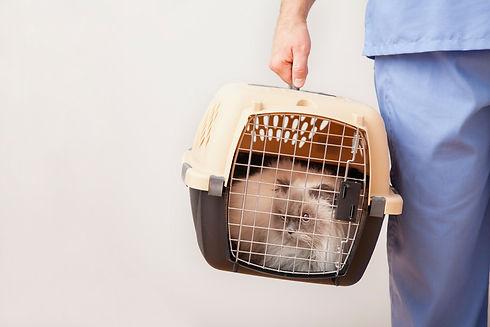 Cat in a transport box