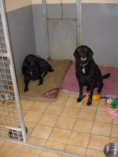 two black dogs in a kennel