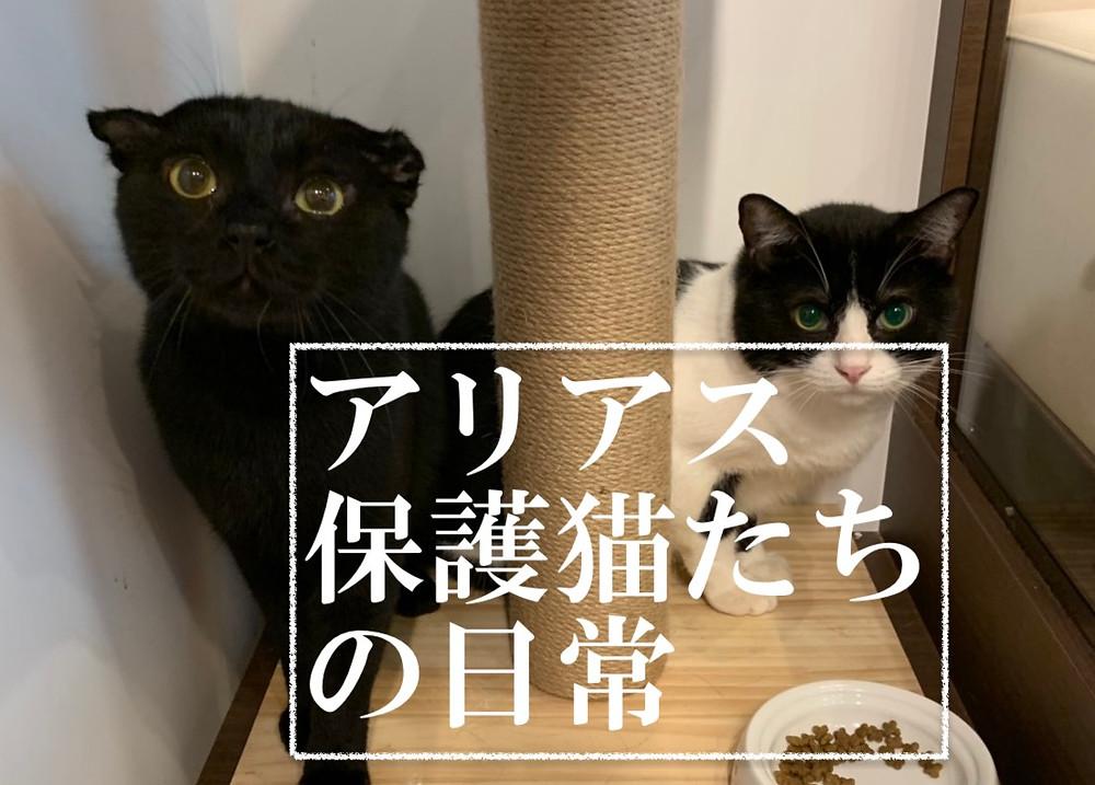アリアスペットクリニック 保護猫