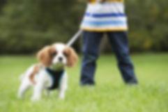 puppywalk.jpg