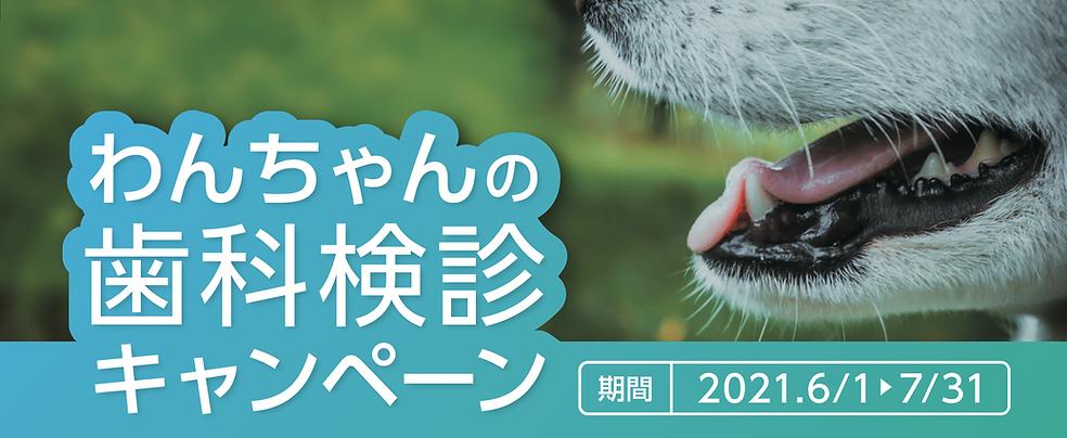 歯科検診キャンペーン.png