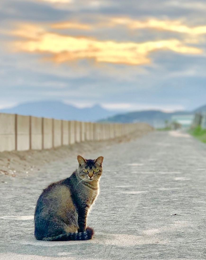 平塚ビーチサイドの猫ちゃん