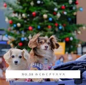 No.38 わくわくクリスマス.png