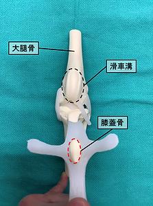 膝蓋骨.png