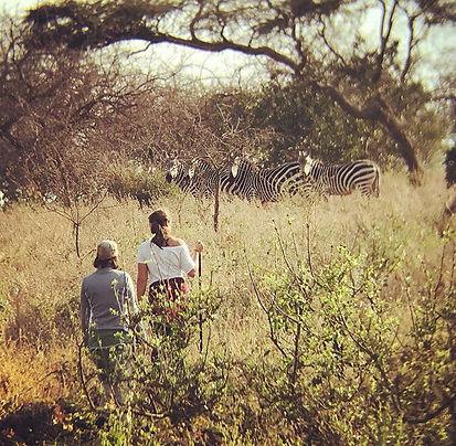 E&F _ zebra.jpg