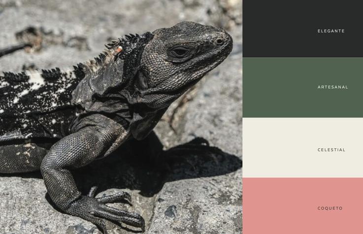 iguana negra2 copia.jpg