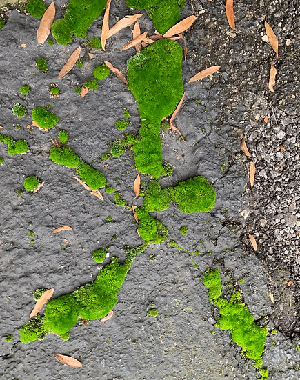 The Persistence of Moss