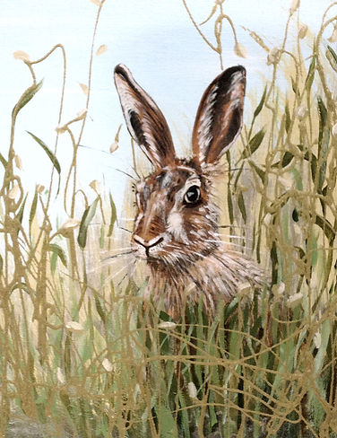 Hare and grasses