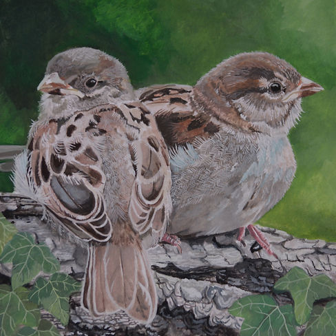 Young Sparrows