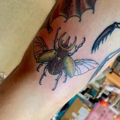 traditional beetle