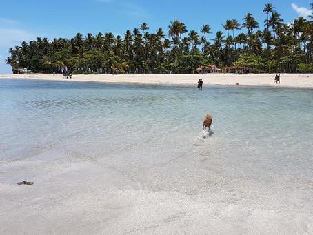Ilha de Boipeba tem praias lindas, sossego e caipirinha no cacau