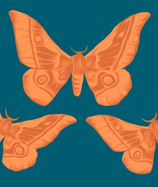 Estudo de Mariposas