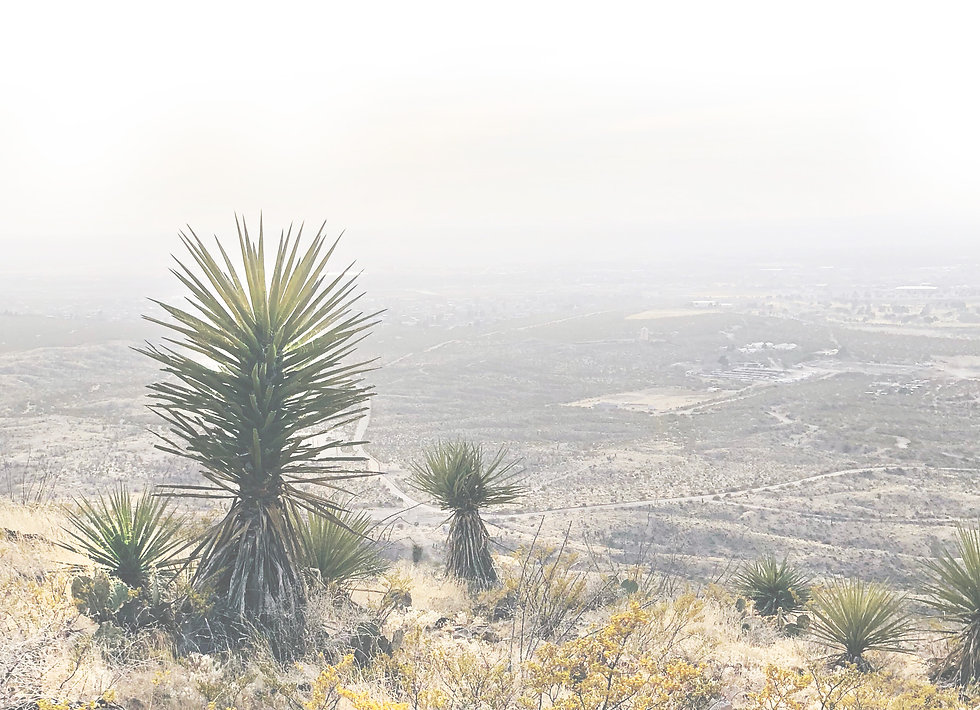 light cactus 2.jpg