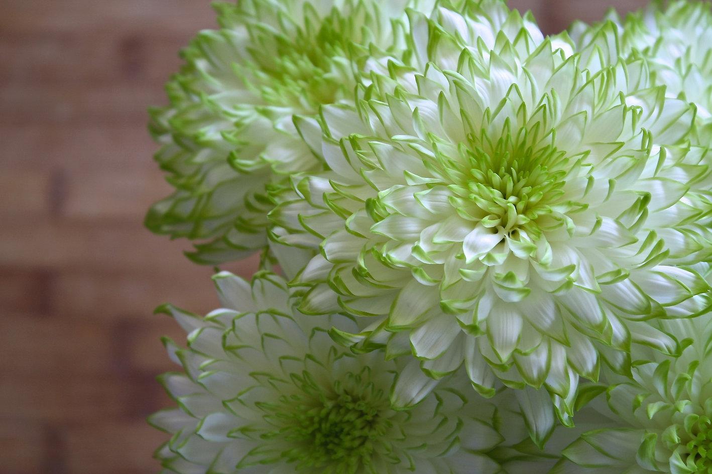 flowers-1417626_1920.jpg