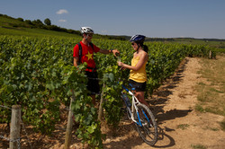 à_vélo_en_Côte_de_Beaune_-_Beaune_Touris