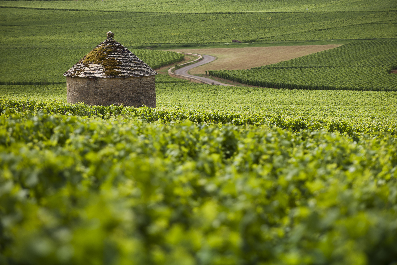 vignoble_Savigny-les_Beaune_-_Beaune_Tou