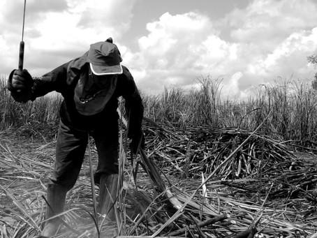 O Agronegócio e a Escravidão Contemporânea