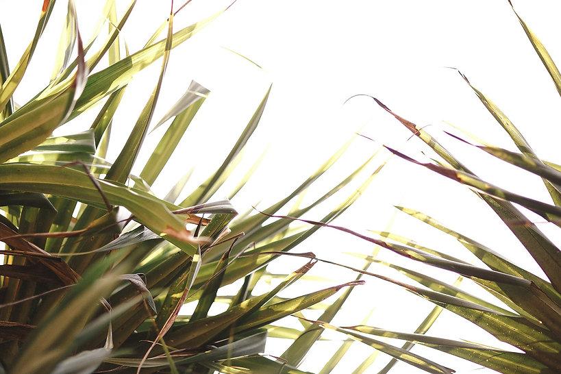 Brightside048_1_edited_edited.jpg