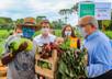 Nossa região também pode: Curitiba já tem 100 hortas urbanas com apoio da Prefeitura