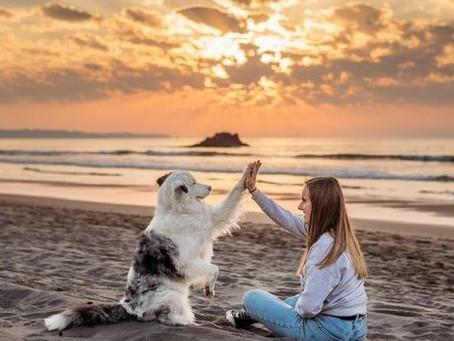 La médiation animale : support de bien-être