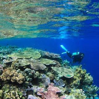 Tawali Diver with Corals.jpg