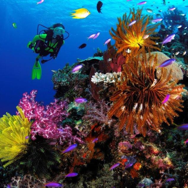 Marcelo Krause Barneys Reef 2.jpg