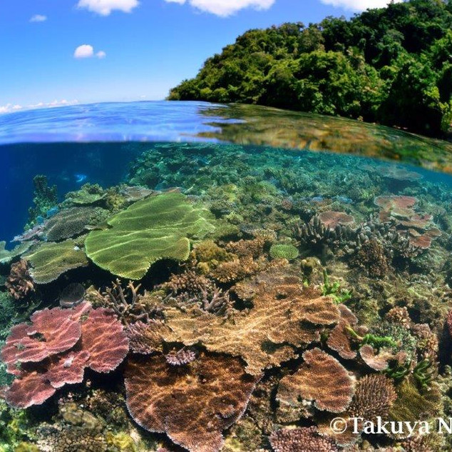 Tawali Snorkelling coral garden.jpg