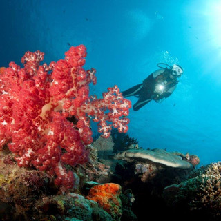Lissennung Red Coral & Diver.jpg