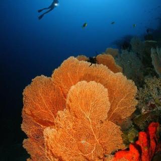 Darek Sepiolo Diver Gorgonian.jpg