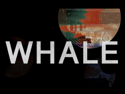 WHALE2019.png