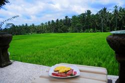 Breakfast by the rice field