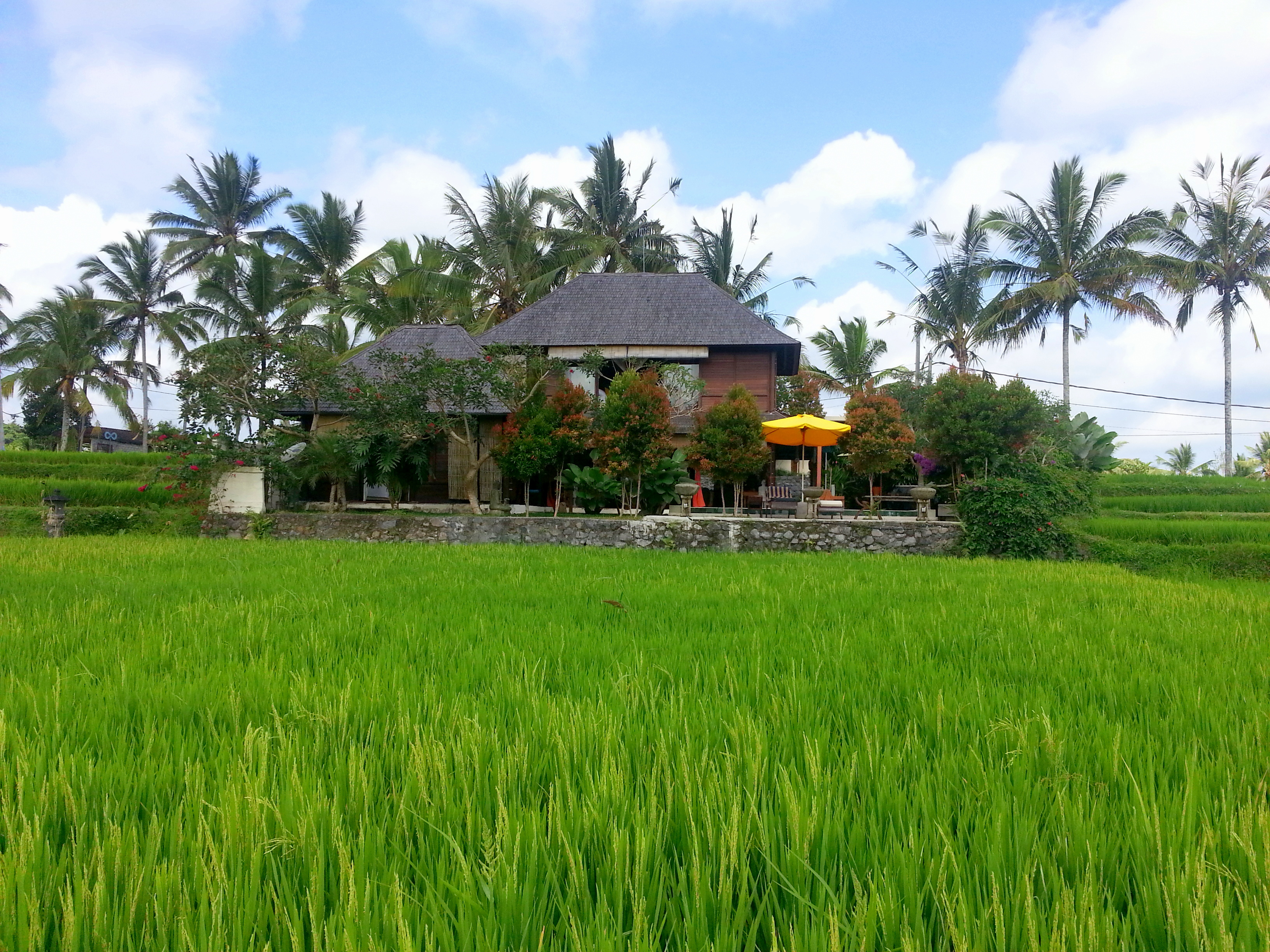 Villa from the rice field