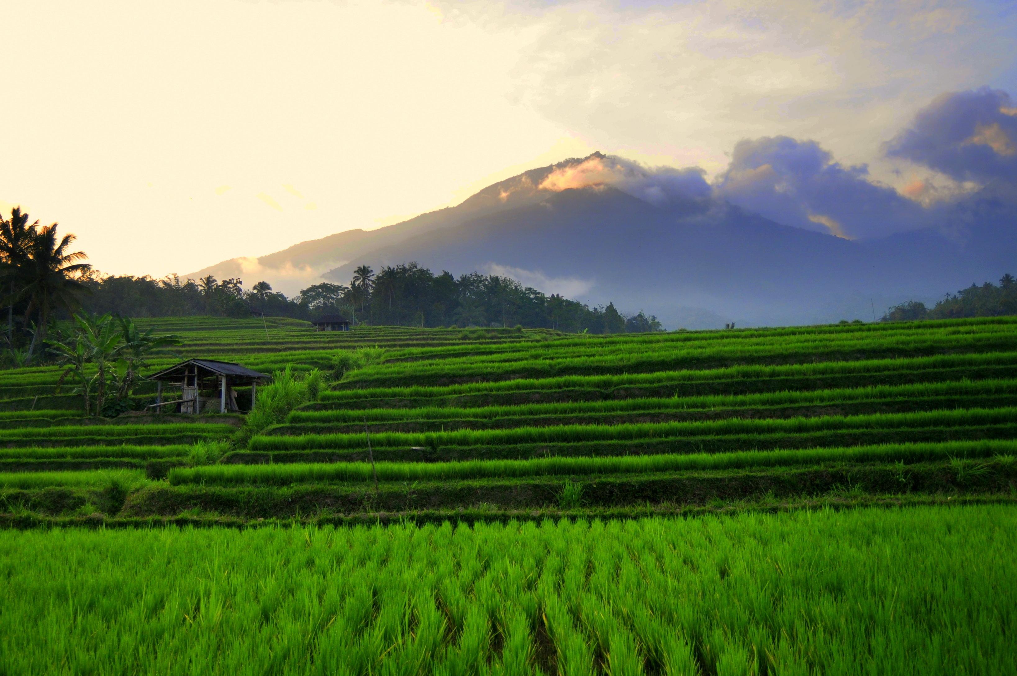 Jatiluwih Rice Terrace, Tabanan