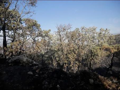 Restringen accesos a Bosque La Primavera y estero El Salado