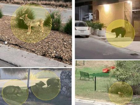 Los animales toman las calles de Monterrey
