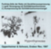 Dendritenaussprossung.jpg