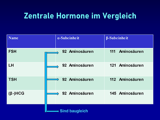 Hormongruppe.png