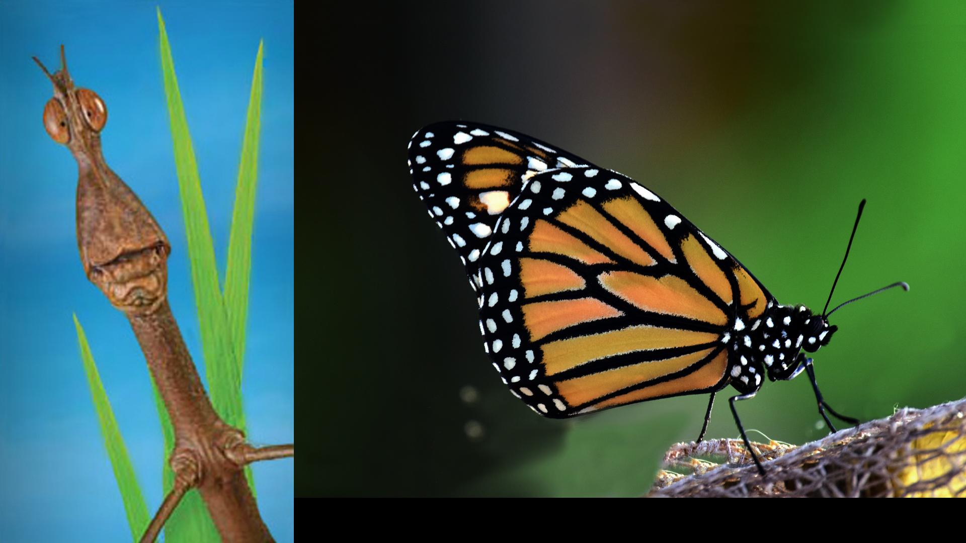 Nous les insectes | Insectarium