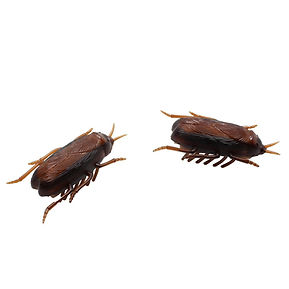 Toy cockroach