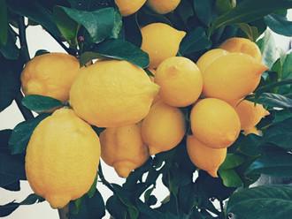 El limonero asustado