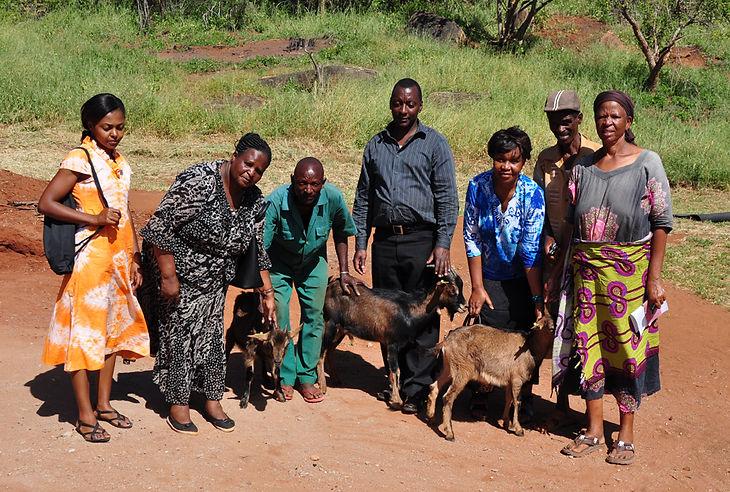 Training_dairy goats.jpg