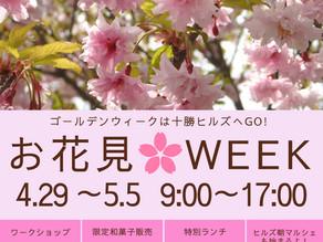 お花見WEEKのお知らせ