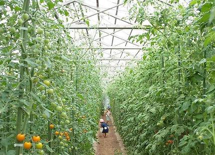 収穫体験2.jpg