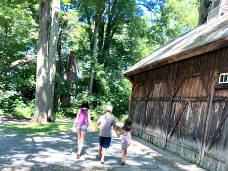 Feral Animals - Summertime Blog Post #4