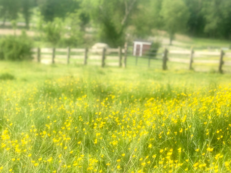 Buttercup Beauty & Blessings