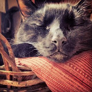 Black cat taken by Beth Wyatt