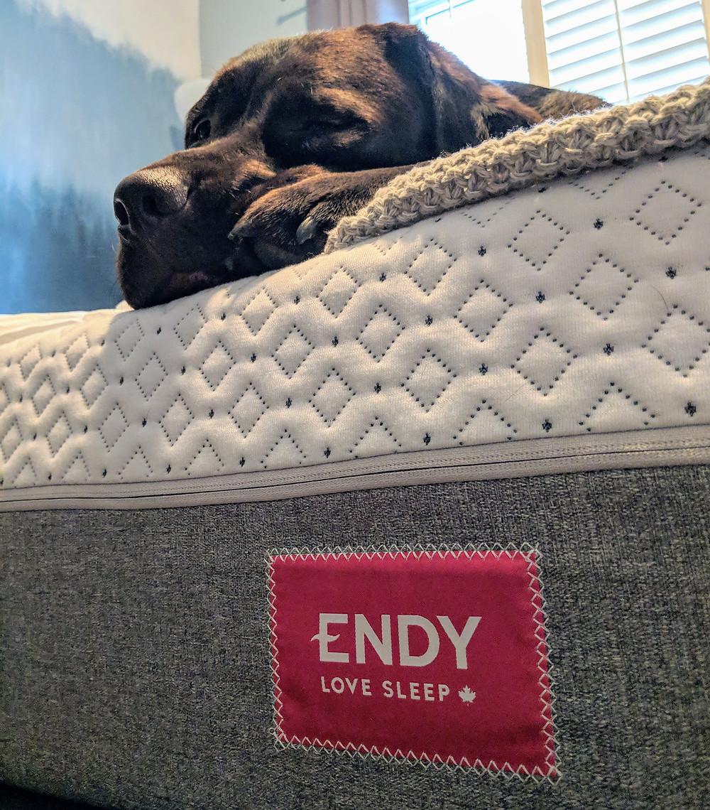 Cute dog sleeping on an Endy mattress