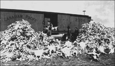 Buffalo Bones