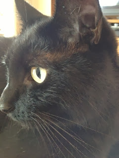In Praise of Black Cats